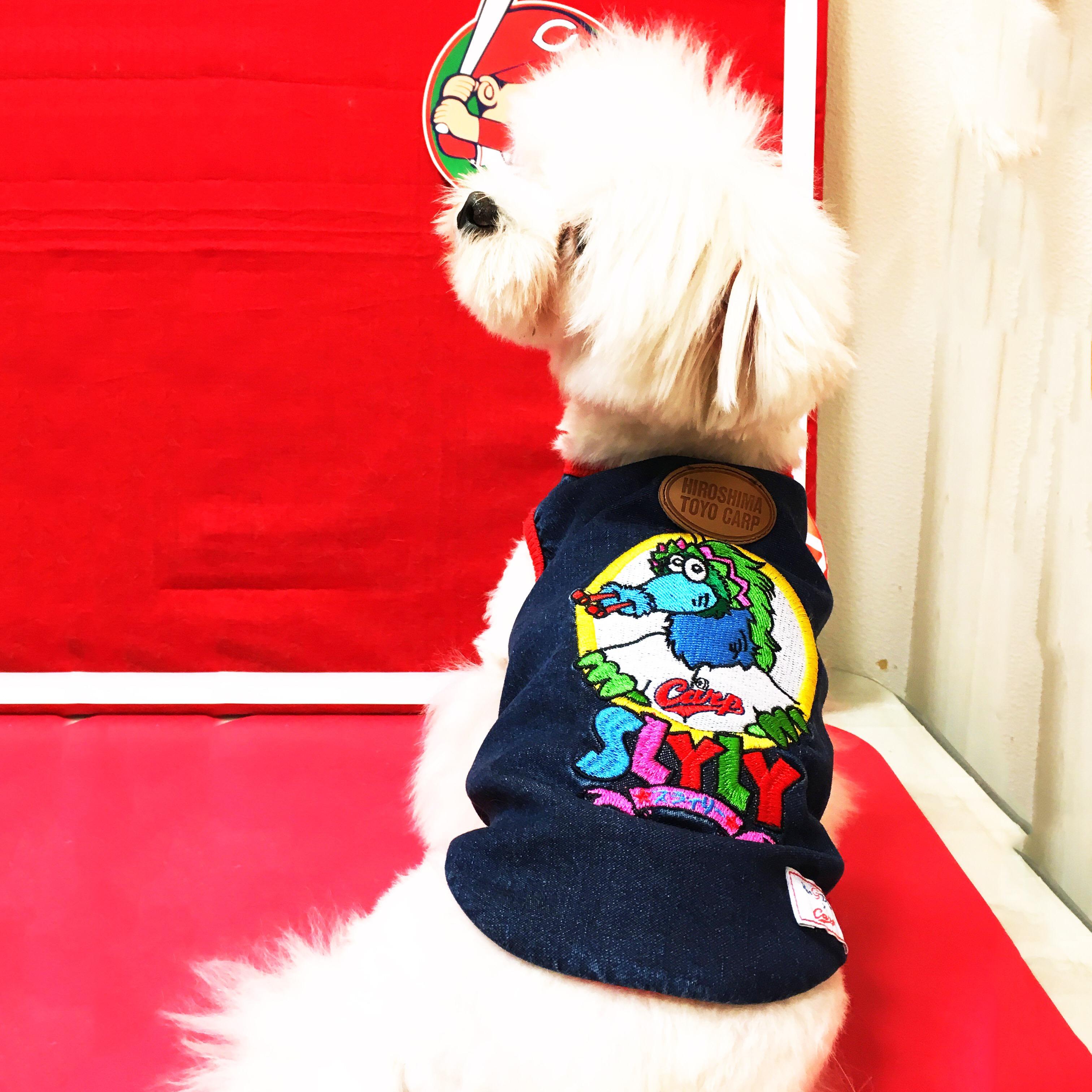 小型中型犬用 デニムTシャツ スラィリーver