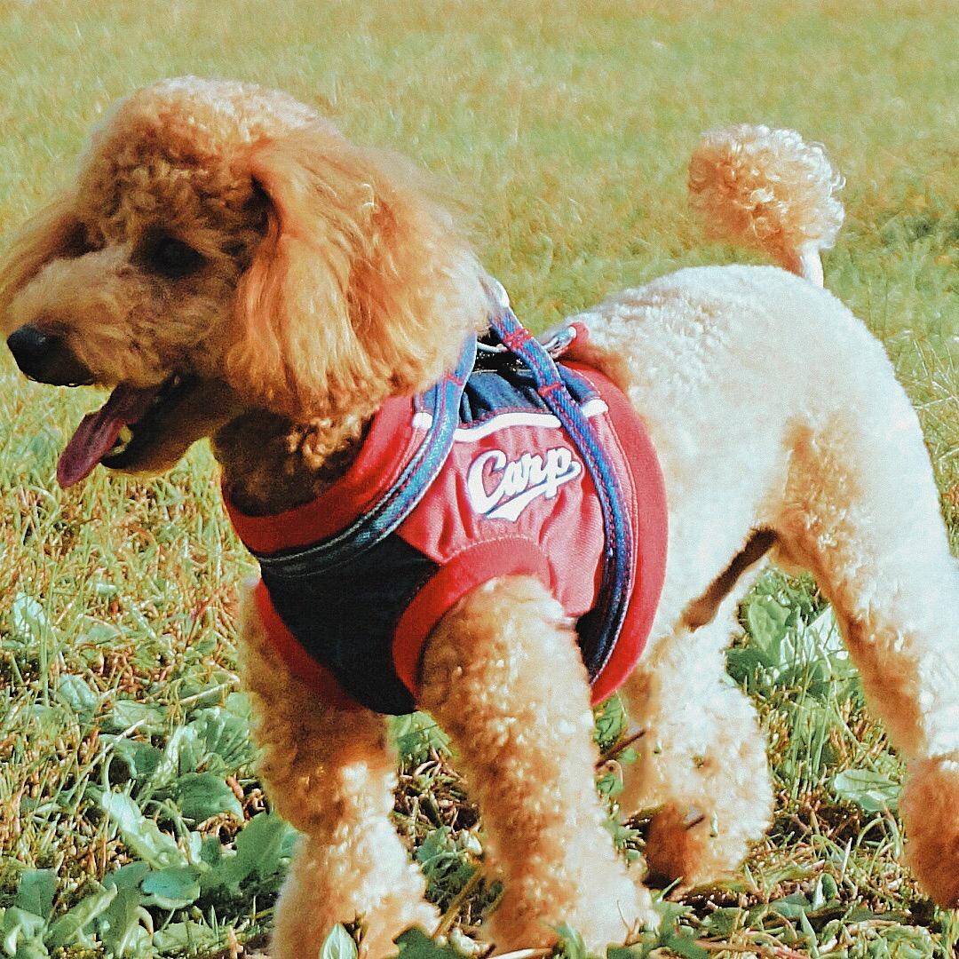 小型中型犬用 デニムハーネス