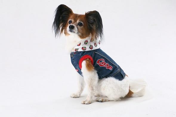 Carp 小型犬着せ替えフード付き 3way Gジャン