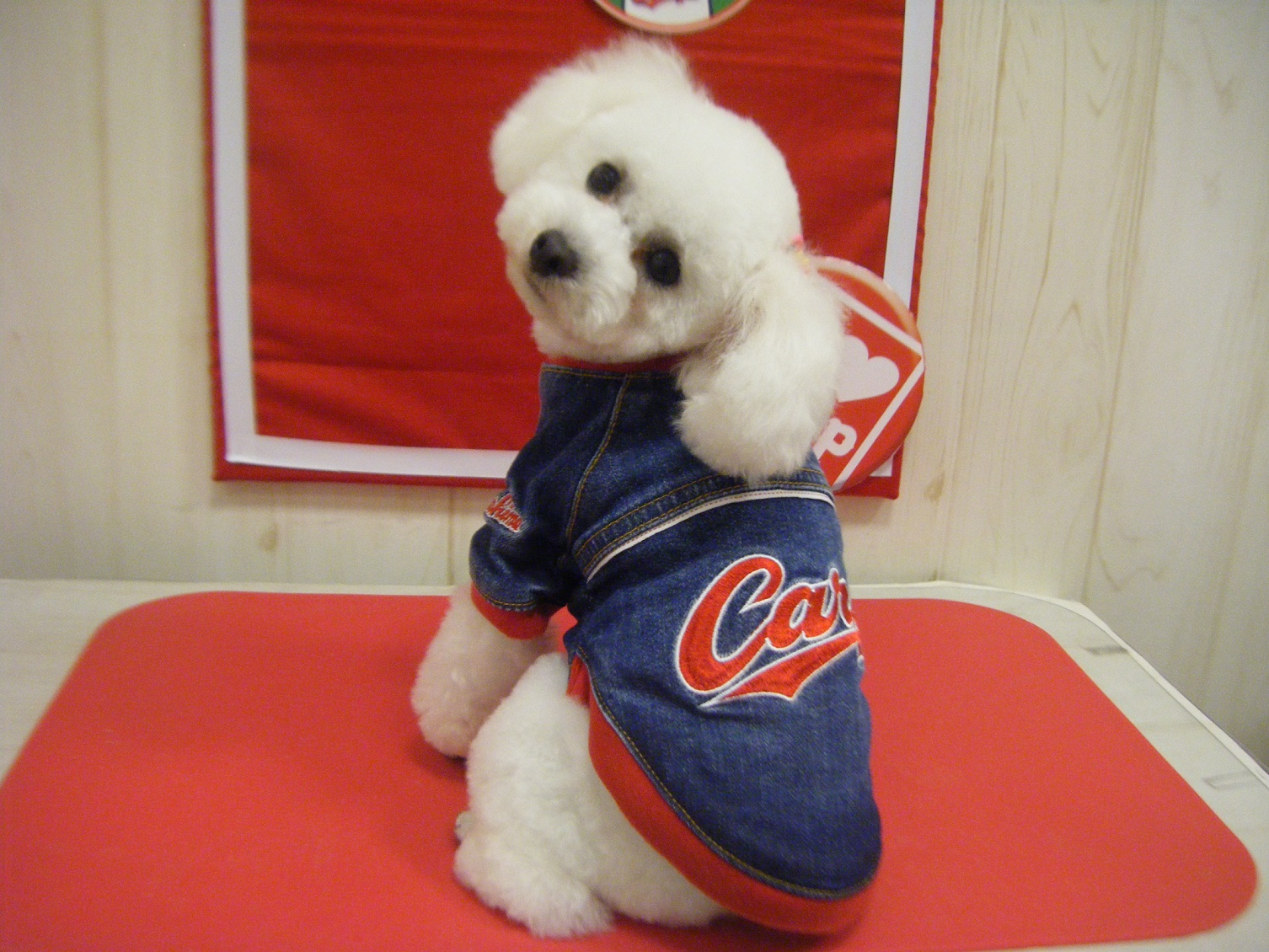 Carp 小型犬デニムスタジャン